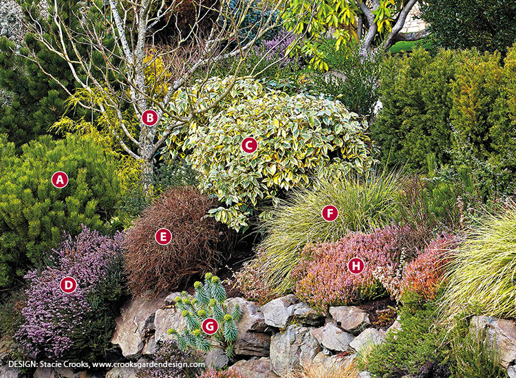 winter-plant-combinations-Silverberry-Mugo-Pine-Japanese-Sedge-Stacie-Crooks-Design: Evergreen foliage and interesting bark adds texture to your winter garden.