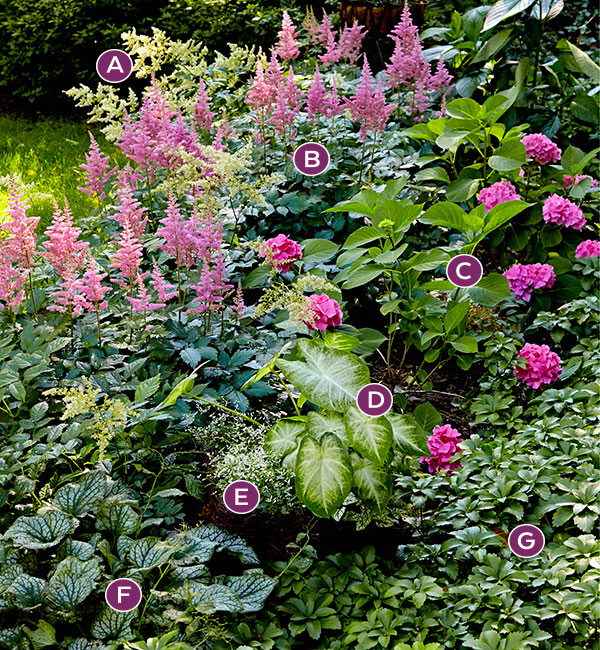 Lettered photo of pink and green shade garden border