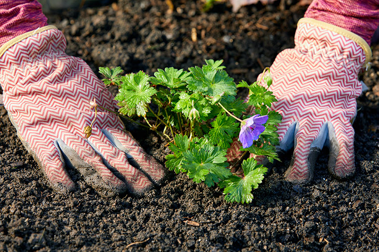 Person planting a plant outdoors in the soil: Go ahead and start planting – you'll feel better in no time.