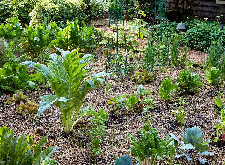 Vegetable garden: A vegetable garden can be a great way to provide healthy produce for your family.