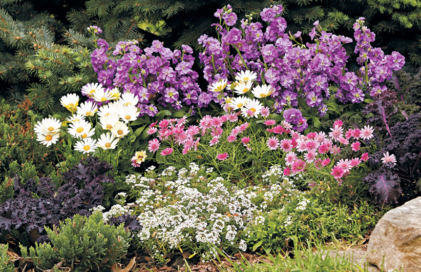 cold-tolerant-flowers-winter-plant-combination: Plant cold-season annuals and tender perennials for long-lasting color.