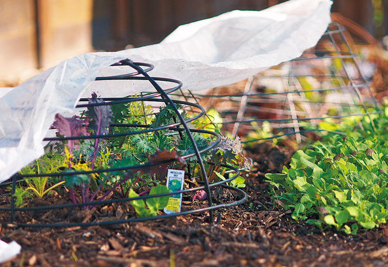 cool-season-vegetables-to-plant-in-fall-cold-protection-tip: To protect plaants from frost, use floating row cover supported by an overturned wire basket to keep fabric from touching the plants.