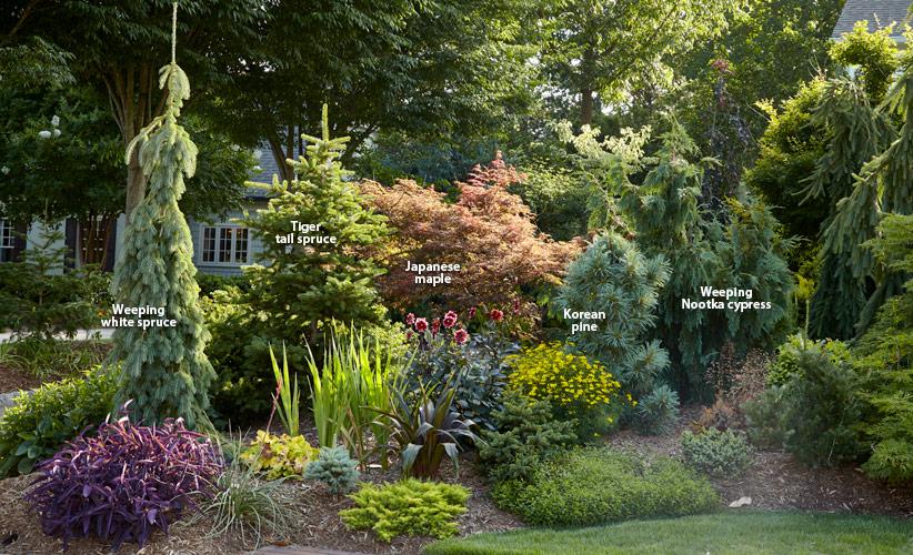 7 Ways To Use Conifers In The Garden Garden Gate