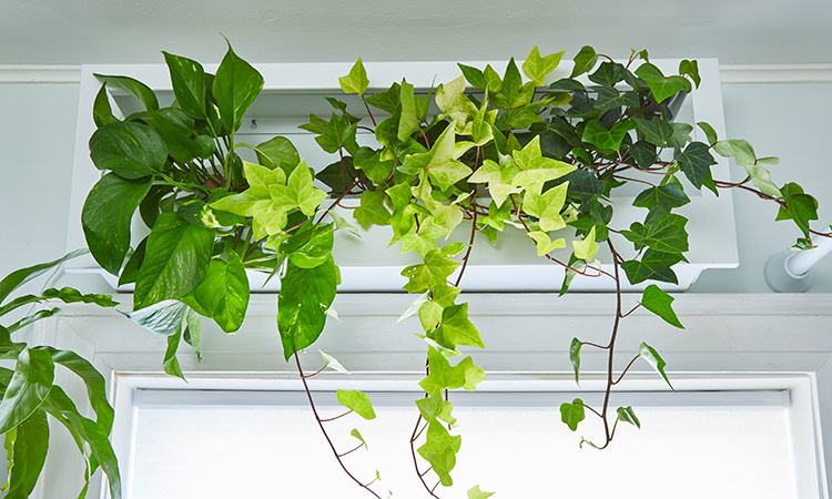 GrowFrame by Modsprout: This framed plant shelf includes a growlight.