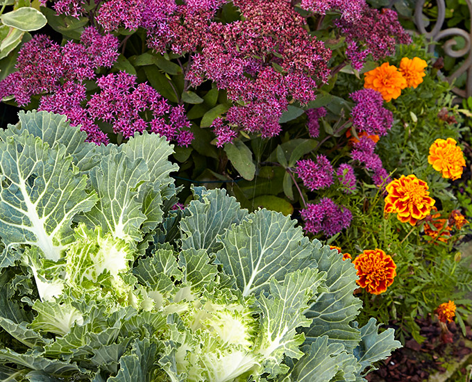 Fall container plants: Kale, sedum, and marigold flower can add great late-season color to your containers.