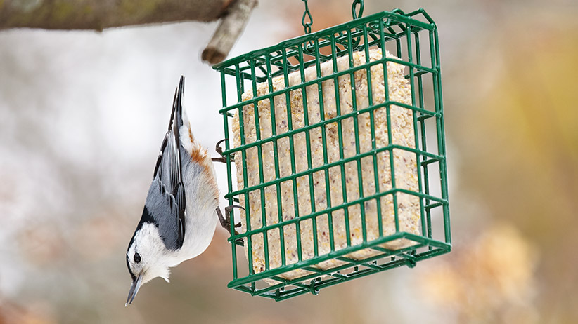 How To Make Your Own Suet Cakes