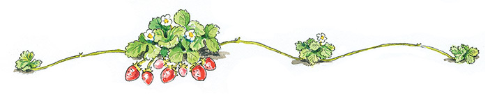 How-to-start-a-strawberry-patch-june-bearing-with-daughters