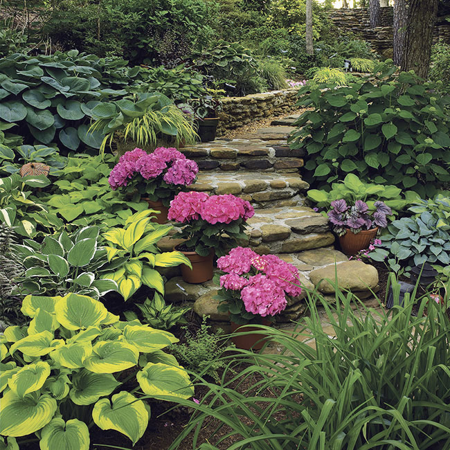 Shade garden pathway with pink hydrangeas and hosta: Pots of bright pink hydrangeas are a great way to highlight an interesting spot in your garden, like these steps.