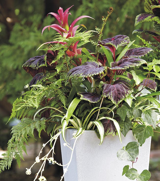fantastic-foliage-container: A mix of foliage color, variegations and texture provides interest even with few flowers.