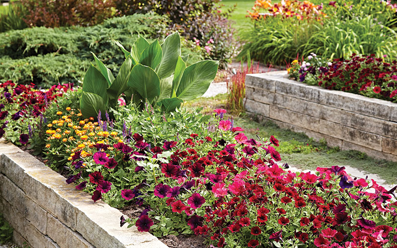 Stone raised garden bed with flowers: Stone is an elegant option for building raised beds and offers lots of flexibility in size and shape.