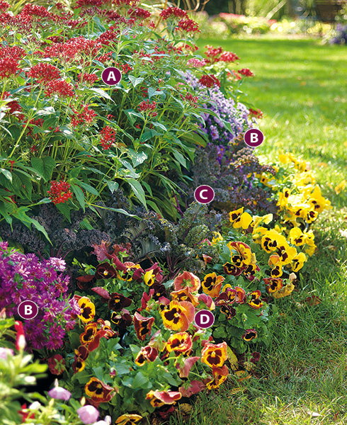 Long late season blooming plant combination with letters: Add cool-season flowers to your garden borders.