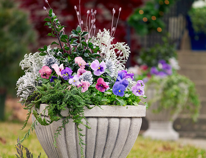 cool-colored-fall-container-garden-ideas-pansies-urn: This formal urn is enhanced with a bit of whimsy — silver-sprayed pine cones and some dried seedheads.