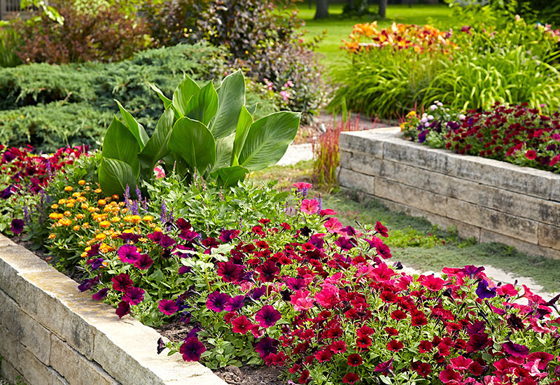Stone raised garden bed full of flowers in summer: Raised beds can be as beautiful as they are functional.