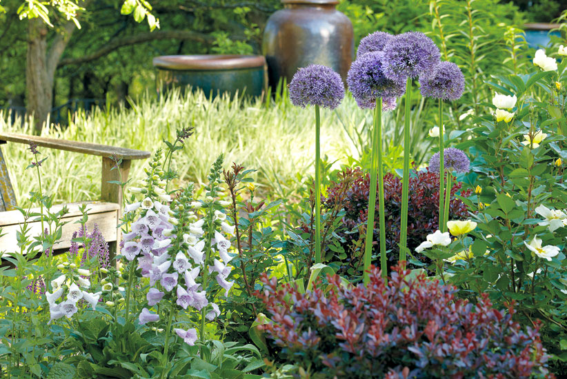 find-the-right-bulb-for-the-right-spot-in-your-garden-crowded-borders: Allium bulbs do well in a mixed plant border.