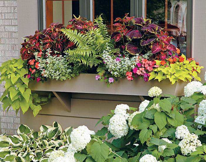 colorful-foliage-windowboxes-coleus-impatiens-lead: This colorful foliage combination adds color to a shady spot.