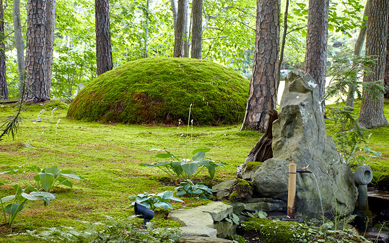 moss-garden-giant-moss-moundR: Here, David has used fern moss to cover this impressive mound as a focal point in his moss garden.