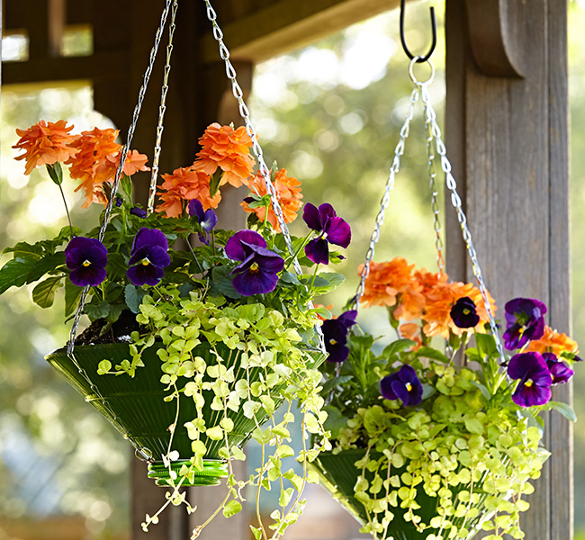upcycled-hanging-baskets-lead-tall: Glass gets hot in the sun so provide some afternoon shade for your planter so the potting mix doesn't dry out as quickly.