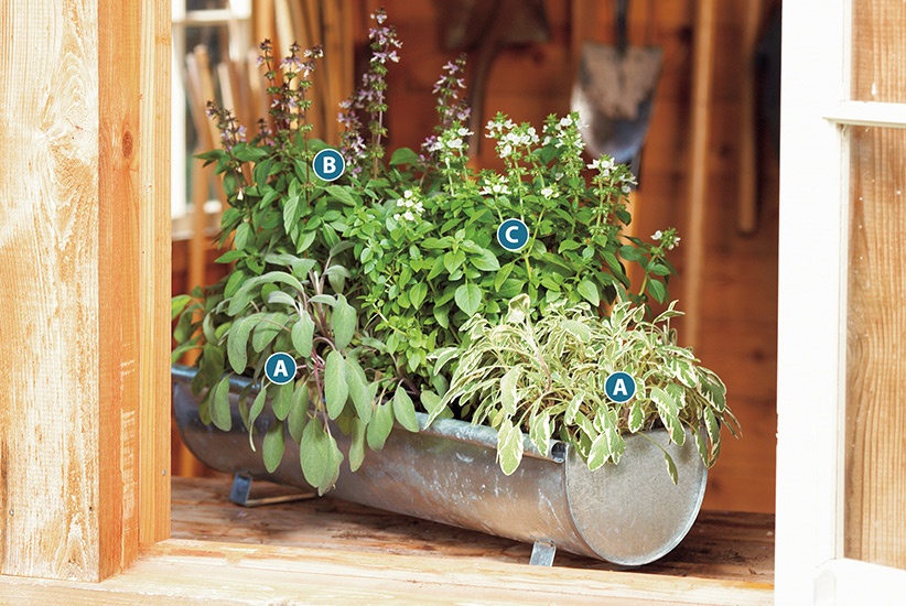 container-herb-garden-ideas-lettered-plan-sage-spearmint-basil: This herb container is full of savory herbs and the variegated foliage of the 'Berggarten Variegated' sage adds visual interest.