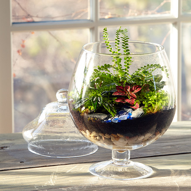 How to build a terrarium