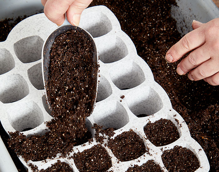 starting-seeds-indoors-growing-medium-seed-starting-soil