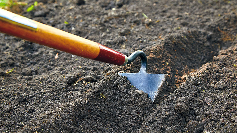 choosing-the-right-garden-hoe-pv: The pointed end of a warren hoe digs a neat furrow in tilled soil, perfect to plant seeds in rows.