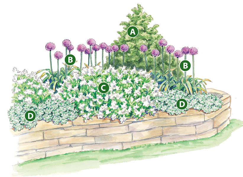 spring-bulb-garden-design-lettered-garden-plan: Sprays of white deutzia flowers are sure to capture attention in the spring garden bed.