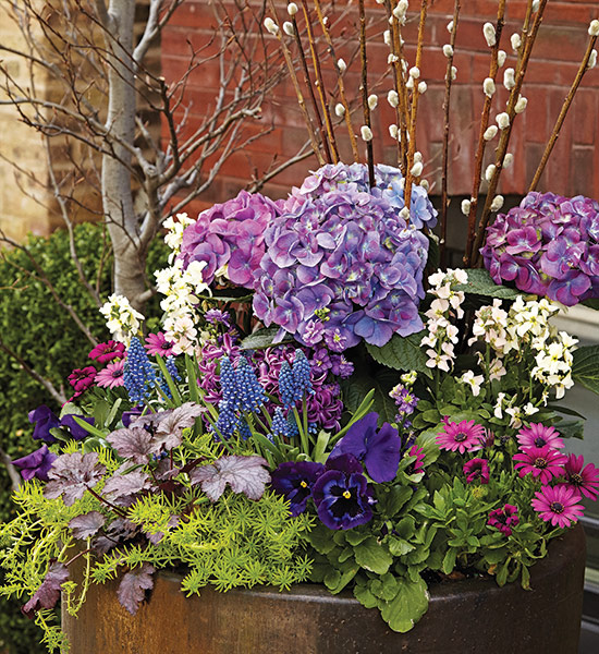 Spring container with blue hydrangeas, pussy willow branches, pansies and stock: Add 10 to 12 pussy willow stems so there are enough of them to make a statement.