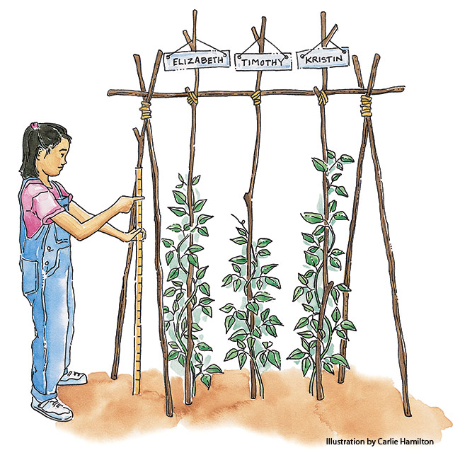 Create-a-childs-garden-Bean-teepee-race: Make gardening fun by creating some friendly competition.