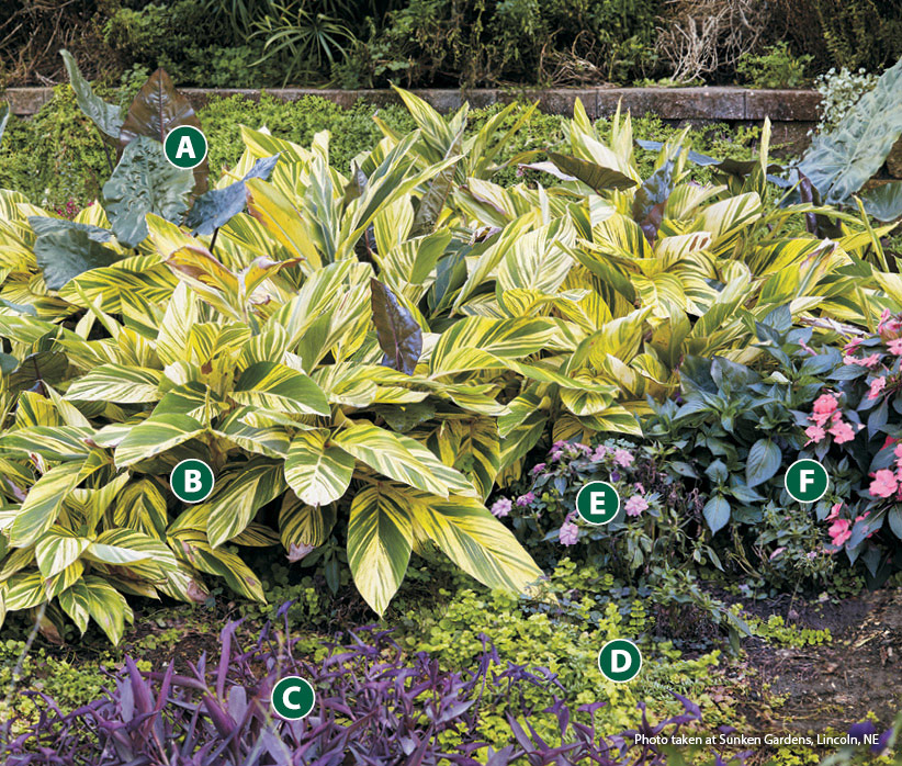 fp-cb-vibrant-shade-garden-OppositesAttract Lettered: Lighter colors like the yellow variegation of the shell ginger and the chartreuse creeping Jenny help bring light to shady spots.
