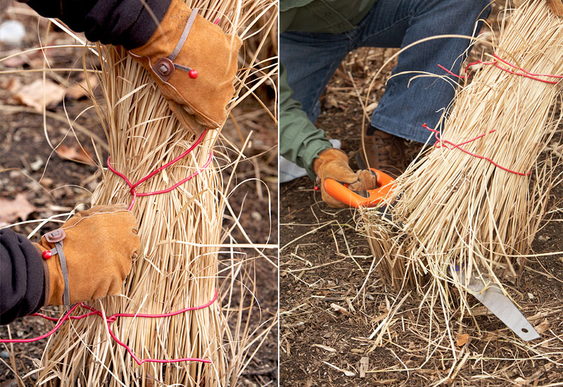 how-to-cutback-maiden-grass-in-spring