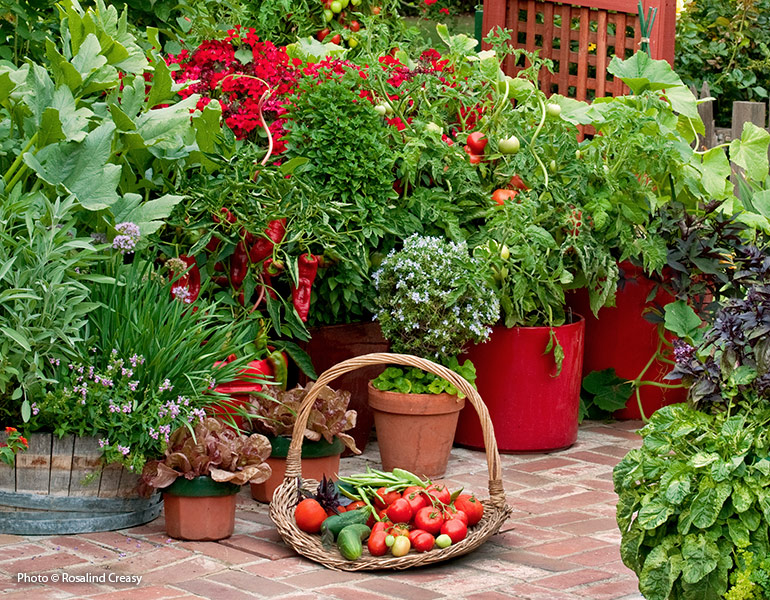 Vegetable garden with harvest basket full of vegetables: Growing your own vegetables yields food that not only tastes better, but it's better for you.