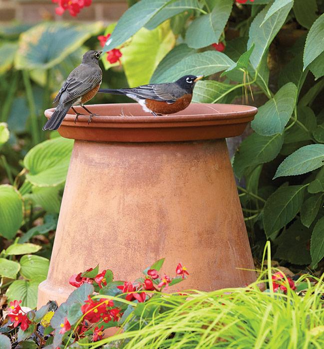 Pj Birdbath 1