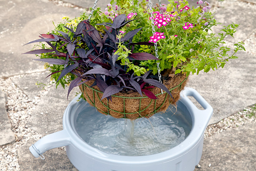 ht-wf-watering-hanging-basket-lead: Set a too-dry hanging basket in a new oil pan filled with water to soak for 10 to 15 minutes to rehydrate.