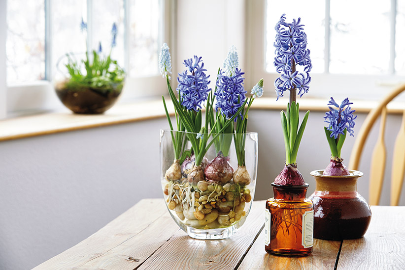 how-to-force-flower-bulbs-indoors-lead: Who says you can't have flowers in winter? Try forcing bulbs indoors.
