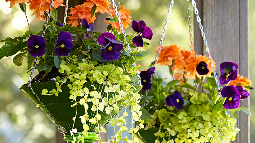 upcycled-hanging-baskets-pv