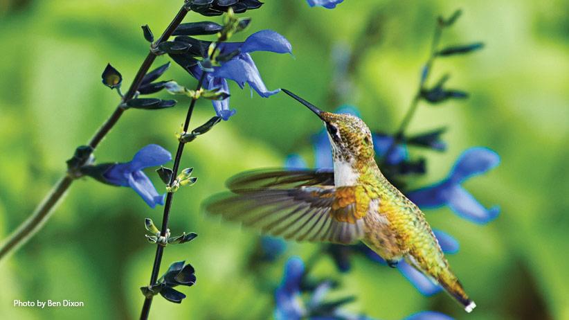 10 Plants To Attract Hummingbirds To Your Garden Garden Gate