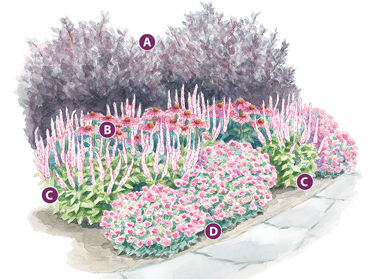 Pretty-in-pink-vignette-lead: Grow this combination in a spot that has well-drained soil and plenty of sun to get the most flowers and healthy foliage.