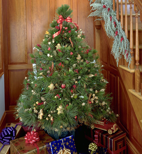 Live Christmas tree care tips: Decorating a live tree is a classic holiday tradition.