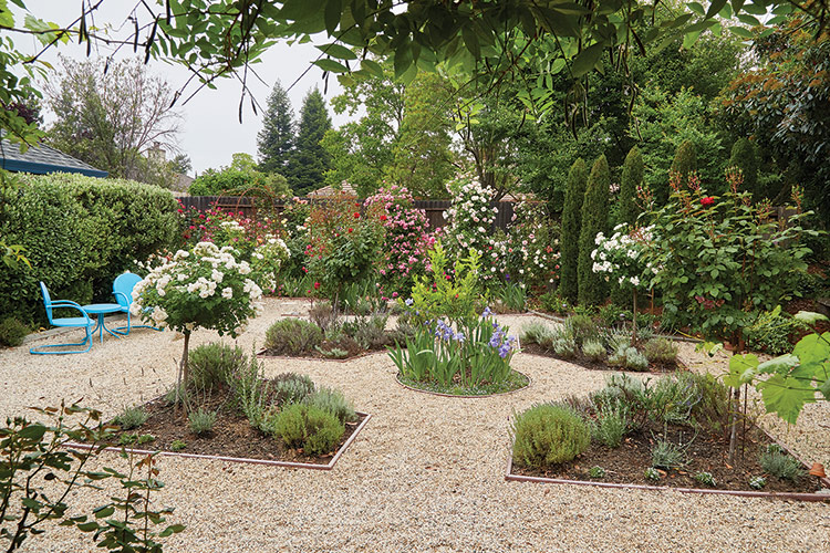 Parterre with roses: The simple design of this parterre is also very practical. With path access on all sides it's easy to get from one side of the yard to the other for maintenance.
