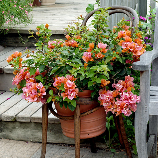 Easy Upcycled Planters That Make A Great Container Garden Garden