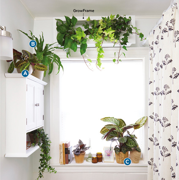Decorating with houseplants in a bathroom: Decorative accents in the bathroom echo the markings in the plant's leaves.