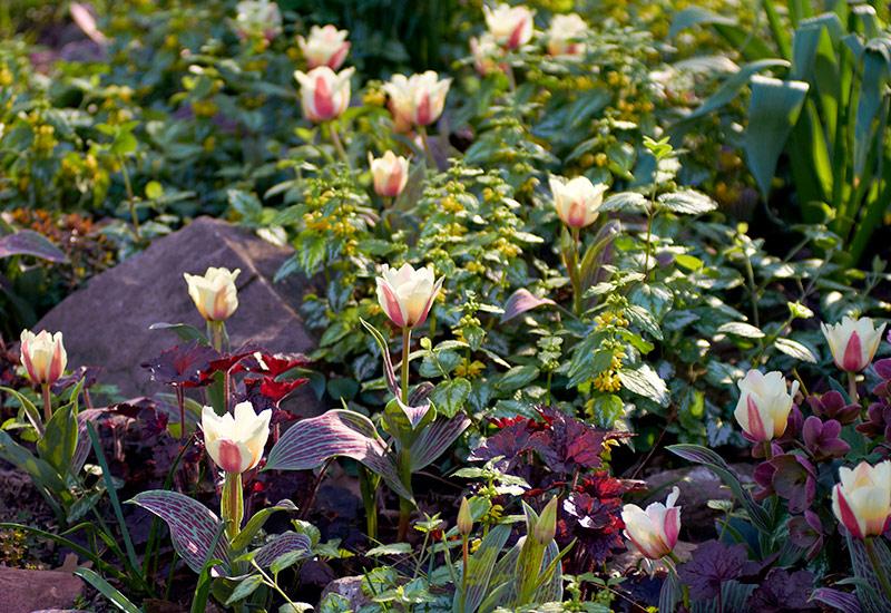 6 Ways To Create A Beautiful Spring Garden Garden Gate