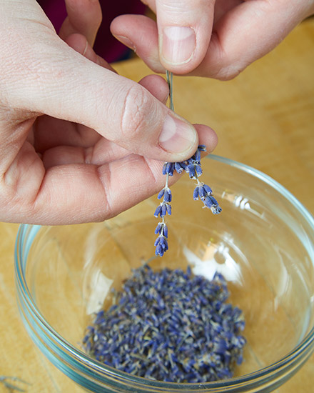 pj-lavender-scrub-strippingFlowers: Remove the lavender florets from the stem to use in the sugar scrub.