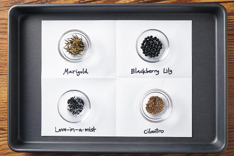 ht-ss-store-seeds-collected-2: Keep seeds organized to prevent them from mixing together while drying on a tray with more than one type. Be sure to label them.