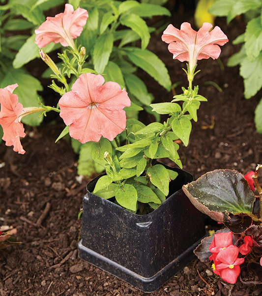 ht-ss-successfully-start-seeds-5: Upcycle old nursery pots into collars to help protect new plants.