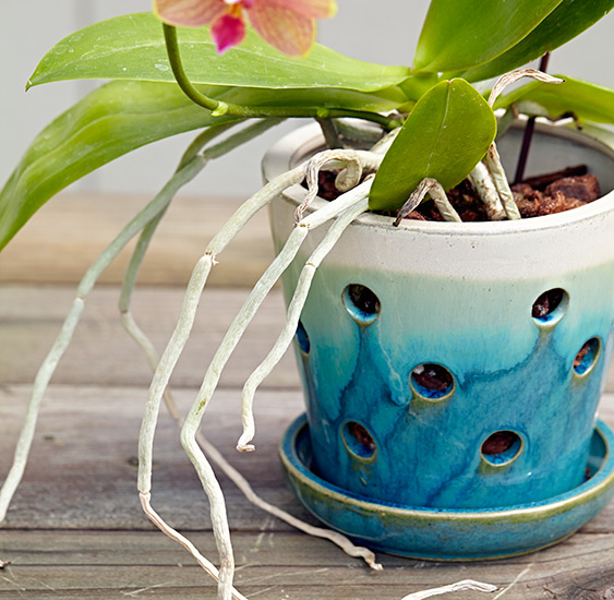 ht-repot-orchid-right-pot: Orchids need good drainage and air movement to their roots. If you're looking to repot an orchid, choose an orchid pot, like this one.