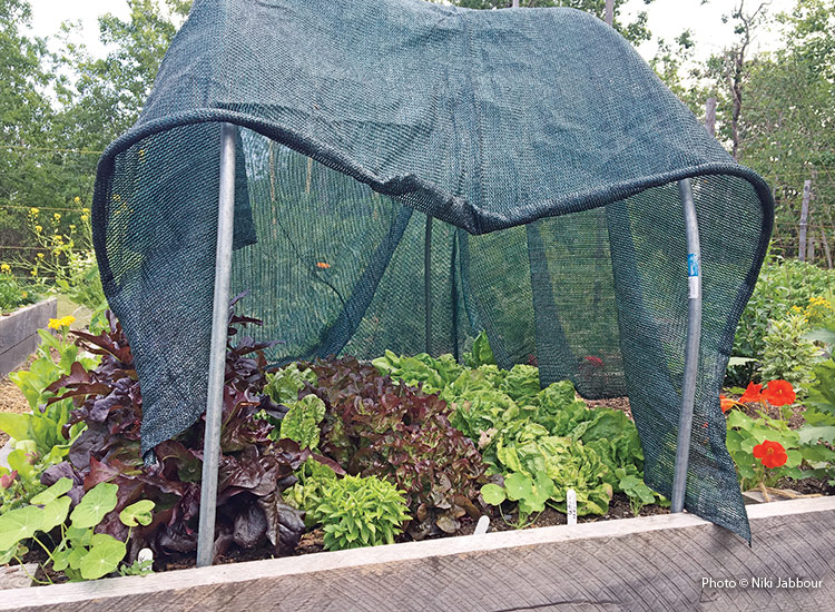 Shade cloth used over a vegetable garden bed: Both shade cloth (above) and row covers can be used to block light for a short  period of time to help encourage better germination of summer-sown  seeds.