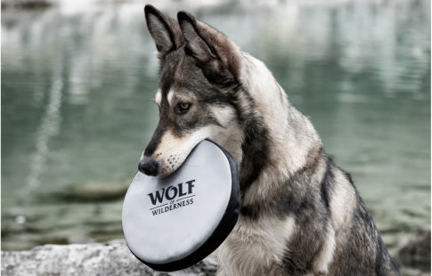 Wolf of Wilderness Frisbee