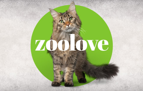 zoolove cat