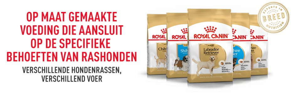 RC Breed hond